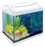 Tetra AquaArt Discovery Line LED Aquarium-Komplett-Set (inklusive LED-Beleuchtung, Tag- und...