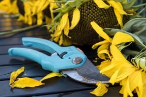 Schere für den Garten
