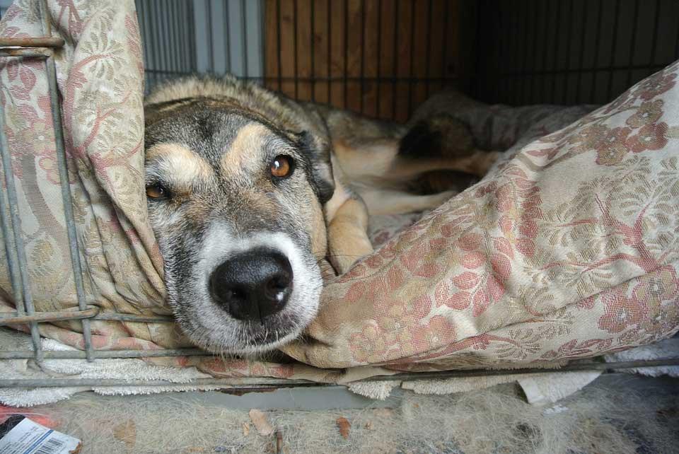 Hunde-Korb-Bett