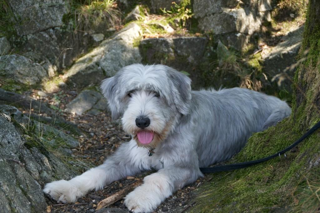 Hundehalsband Größe