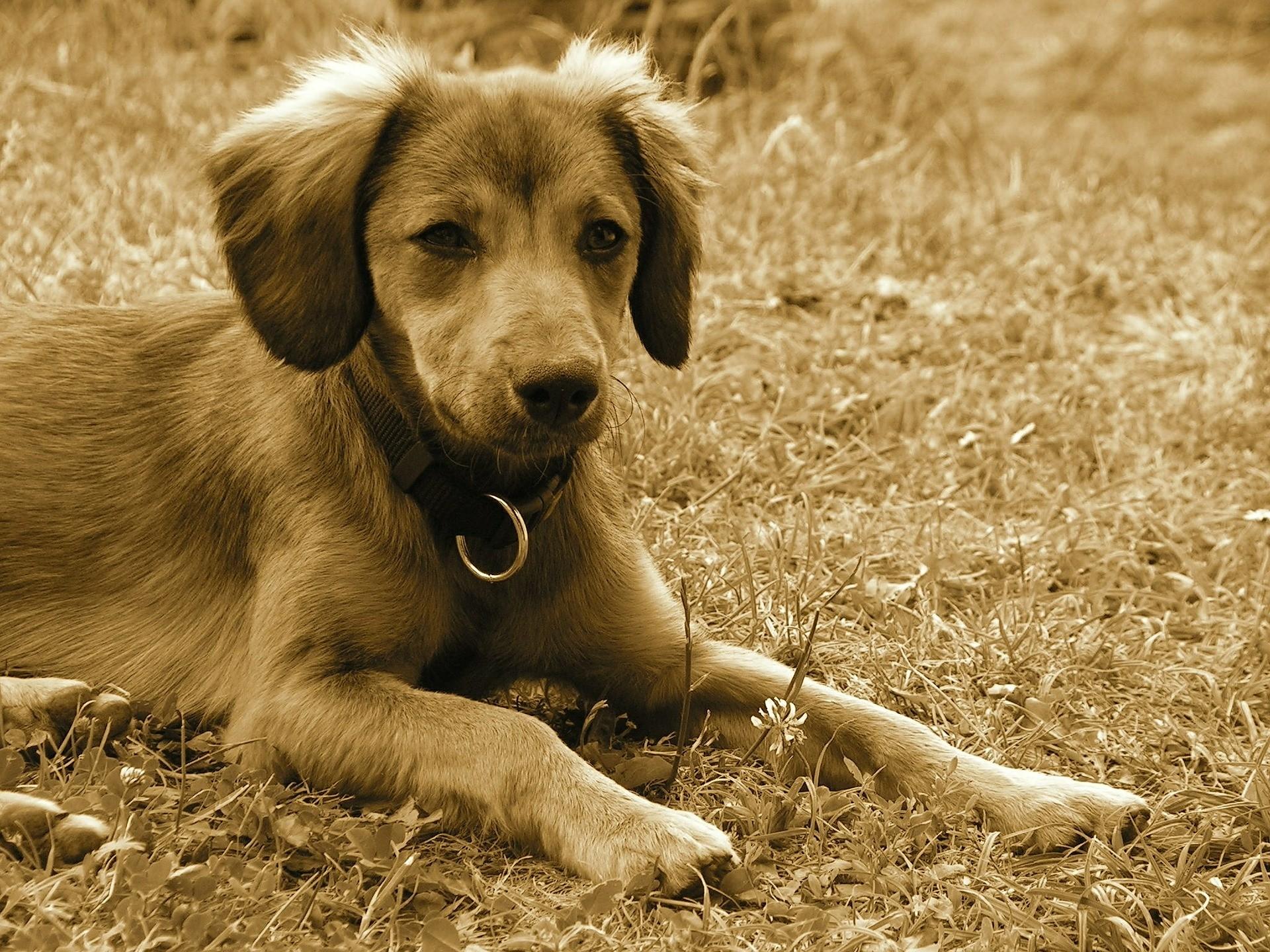 Hundehalsband Test Vergleich
