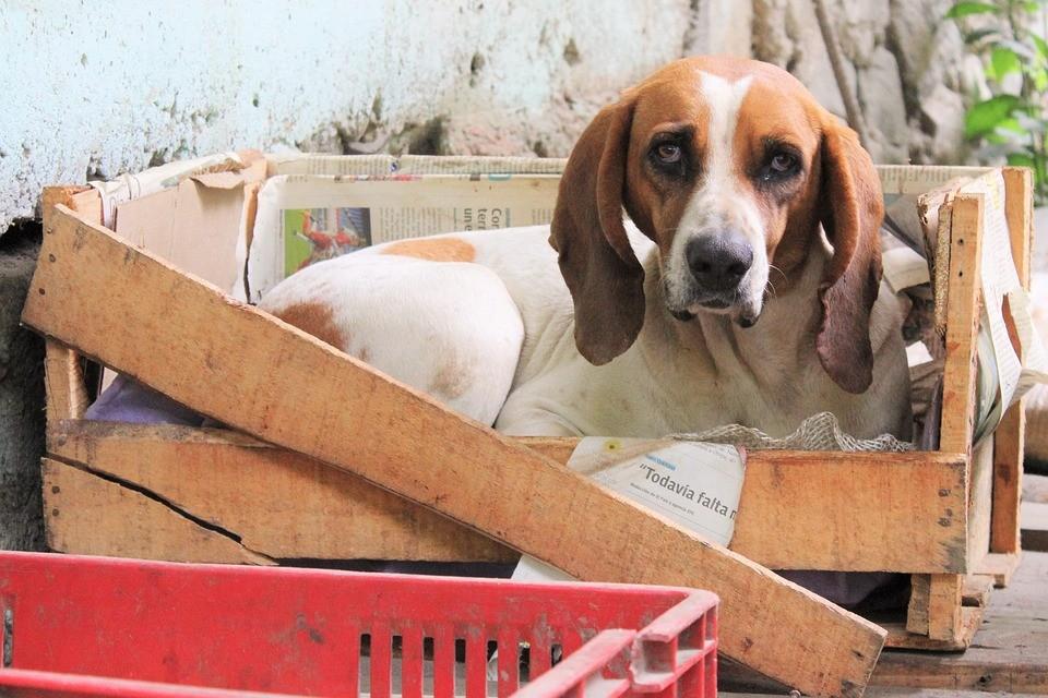 Hundtransportbox- die Holzkiste