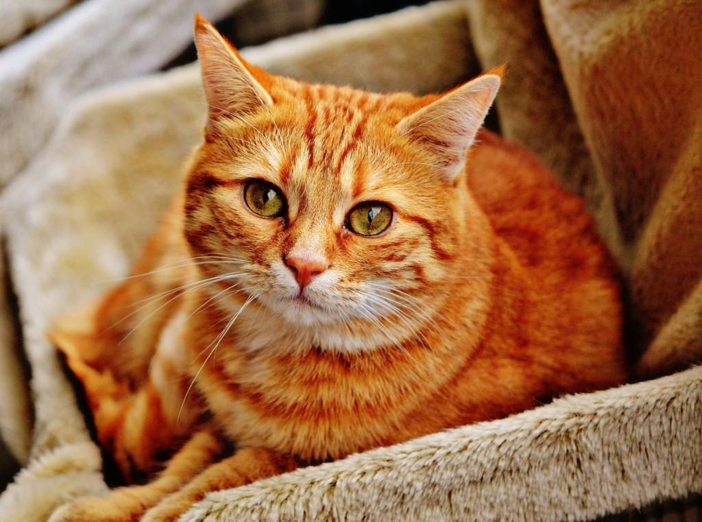 Katzen Trockenfutter Inhaltsstoffe