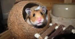 Hamsterkäfig Holz