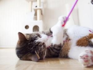 Katzenkratzbaum Spielzeug
