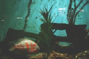 Aquarium Bepflanzung