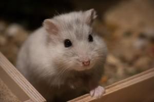 Hamsterkäfig Größe des Hamsters