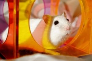 Hamsterkäfig Spielzeug Hamster