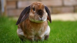 Kaninchenstall Hasen richtig halten