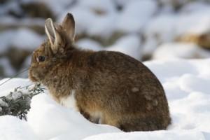 Kaninchenstall Winter
