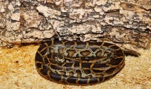 Wüstenterrarium Schlangen Echsen