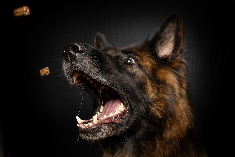 Hundefutter: Hund fängt Trockenfutter aus der Luft