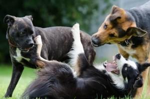 Hundeshampoo verschiedene Rassen