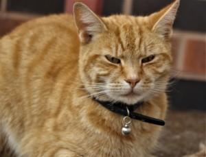 Katzenstreu Klumpenbildung
