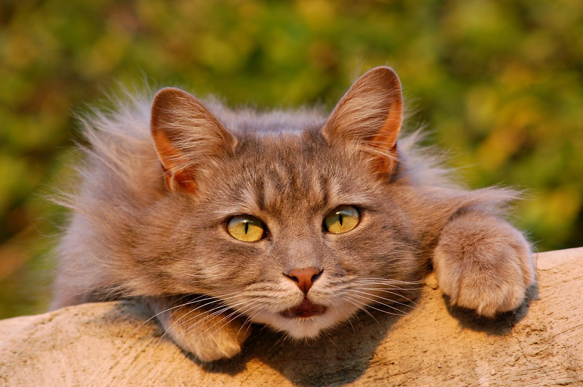 Katzenstreu