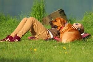 Diätfutter für Hunde zu wenige Bewegung