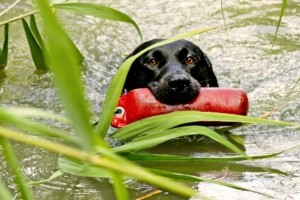 Hundefutterbeutel Kommandos beibringen