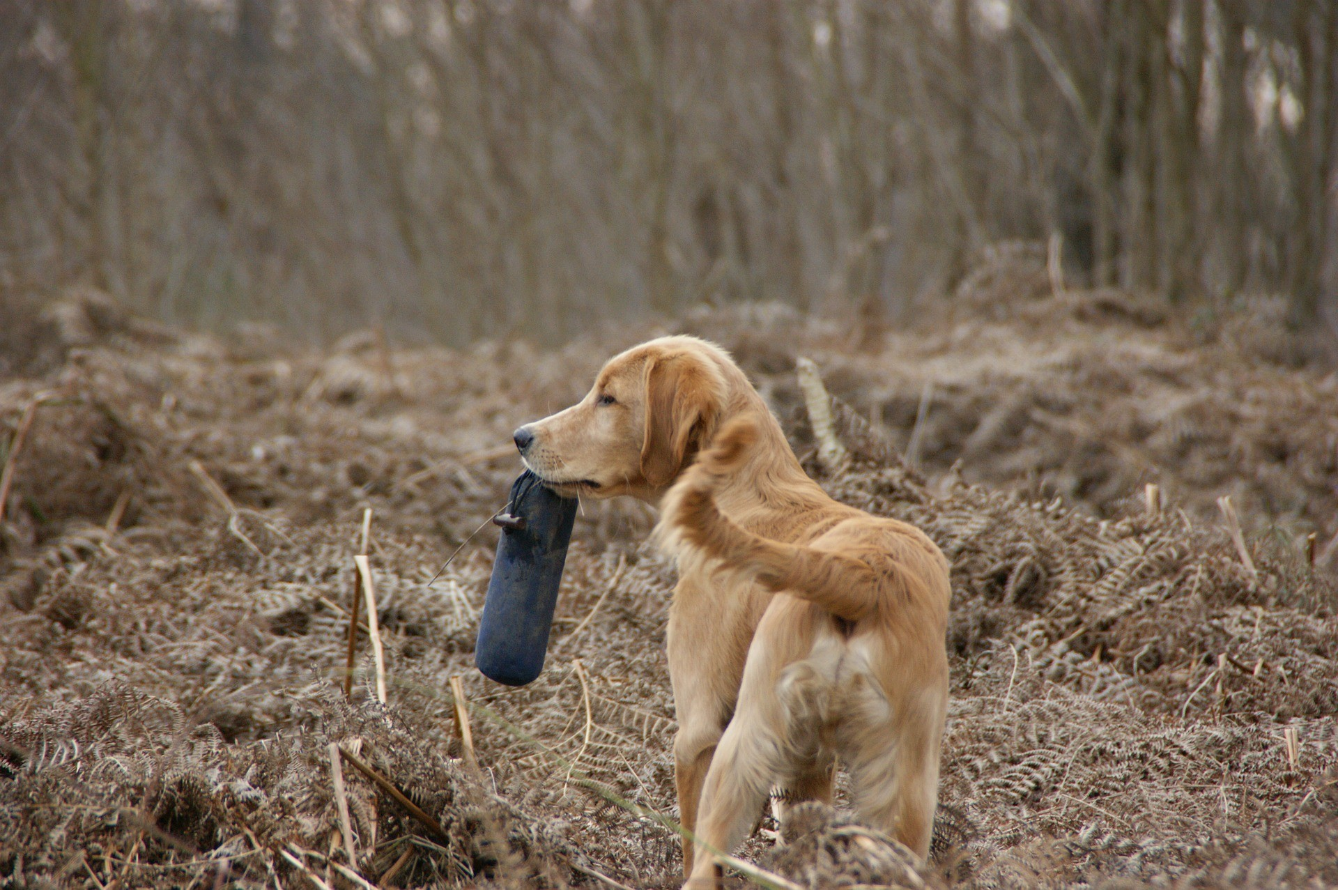 Hundefutterbeutel