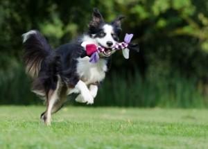 Kauspielzeug Größe passend zum Hund