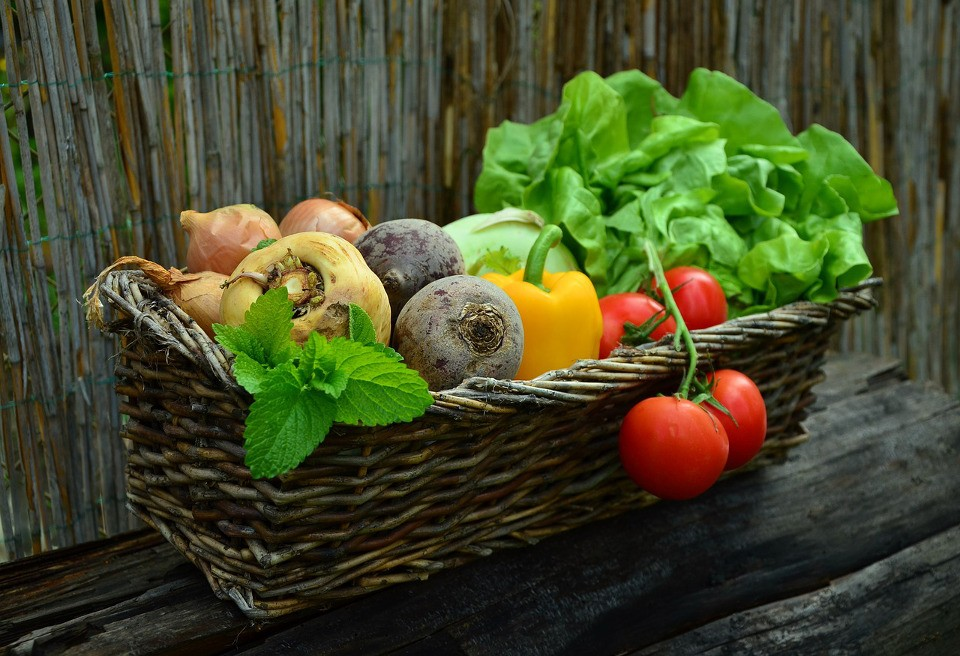 Gemüsekorb Test