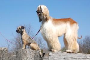 Hundebürste langes Fell