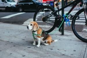 Dogscooter langsam anfangen