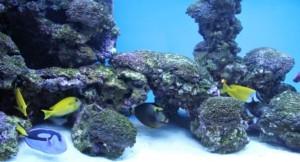 Mulmsauger Aquarium sauber machen