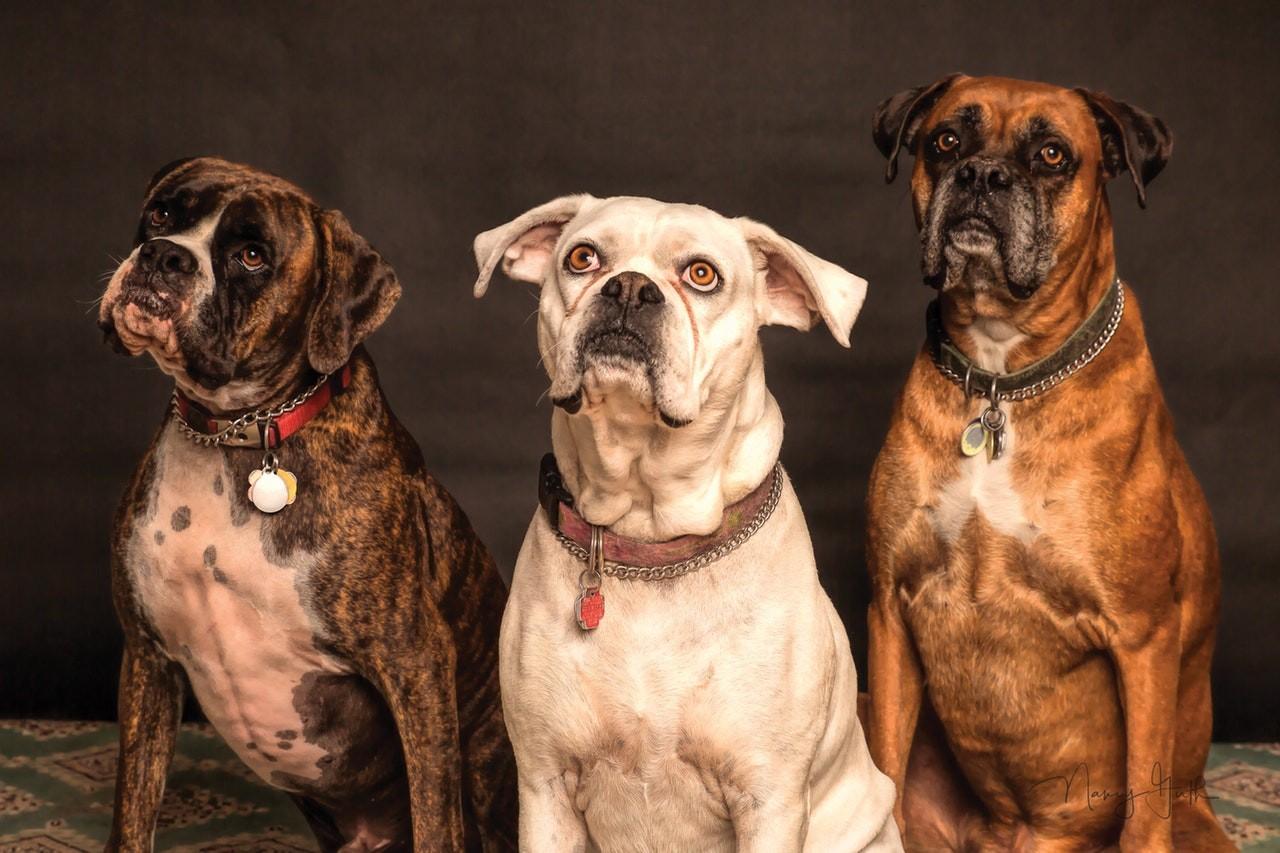 Hundeleinen aus Leder sehen an jedem Hund gut aus.