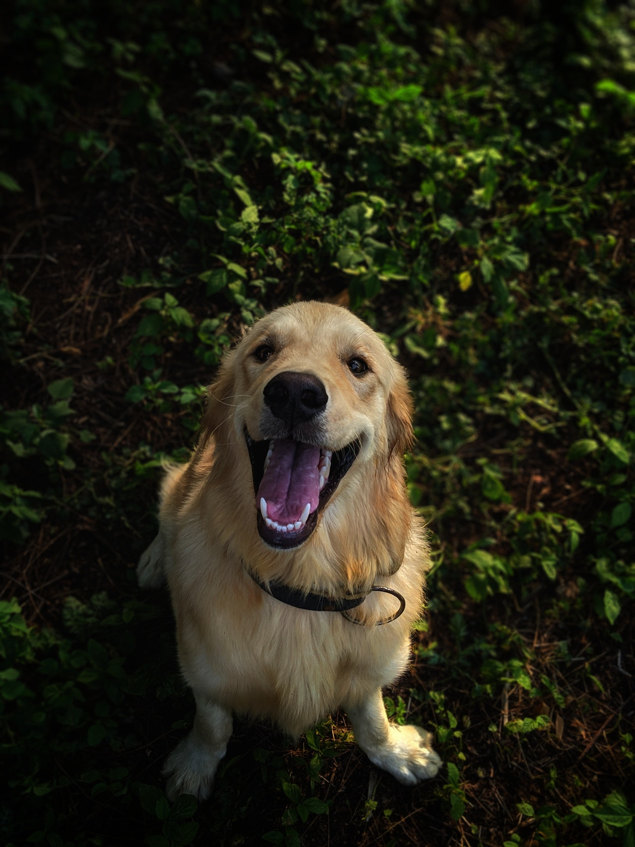Hunde lieben Leder Hundehalsbänder