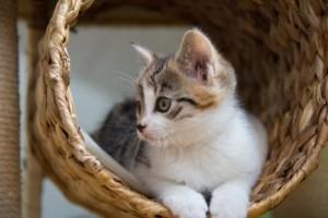 Kratztonne Katzen Krallen abwetzen