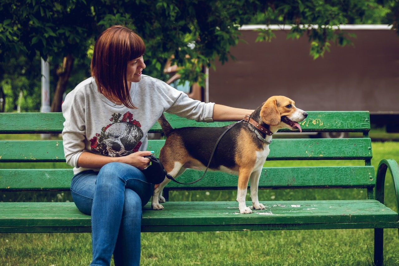 Leder Hundehalsband Hunde lieben