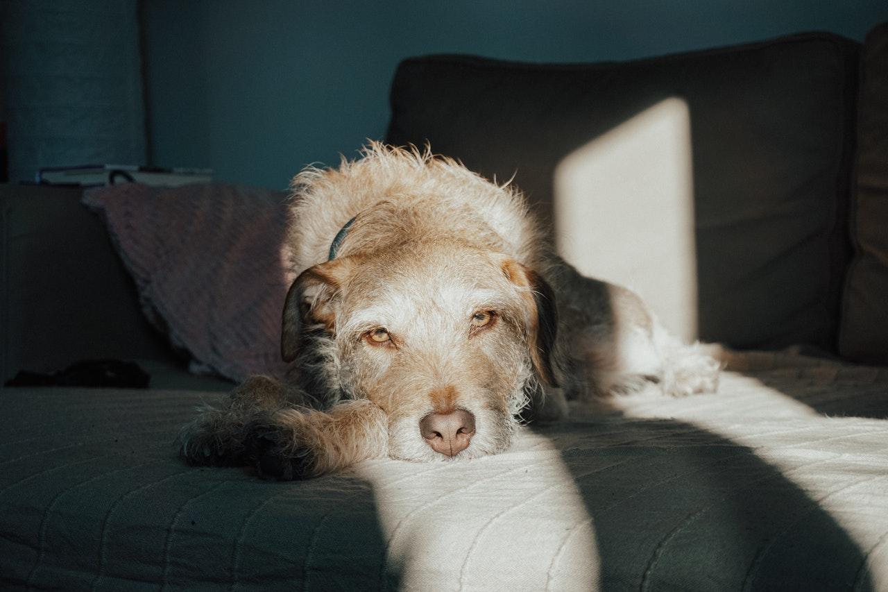 Hundehaarstaubsauger entfernt Haare von deiner Couch