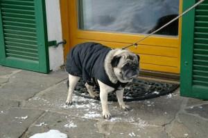 Hunderegenmantel für Schnee und Eis