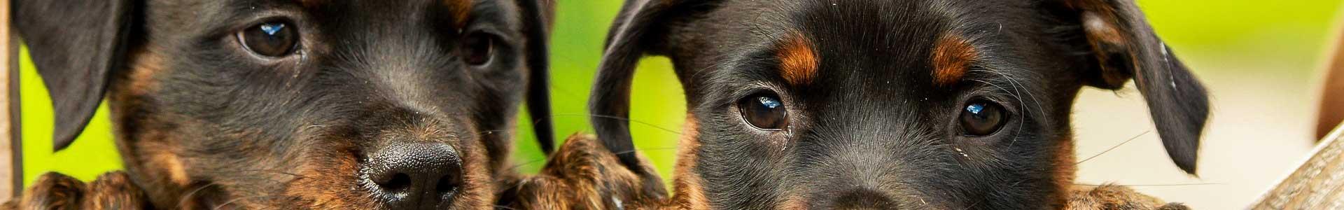 Hunde-Produkte-Test