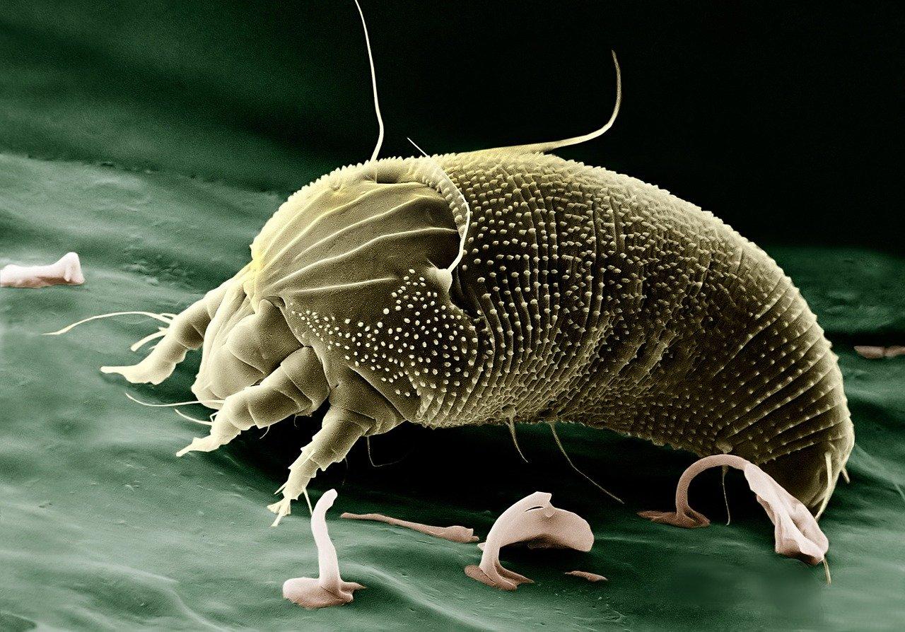 Milben sind sehr kleine Tiere, welche mit dem bloßen Auge nicht zu erkennen sind.