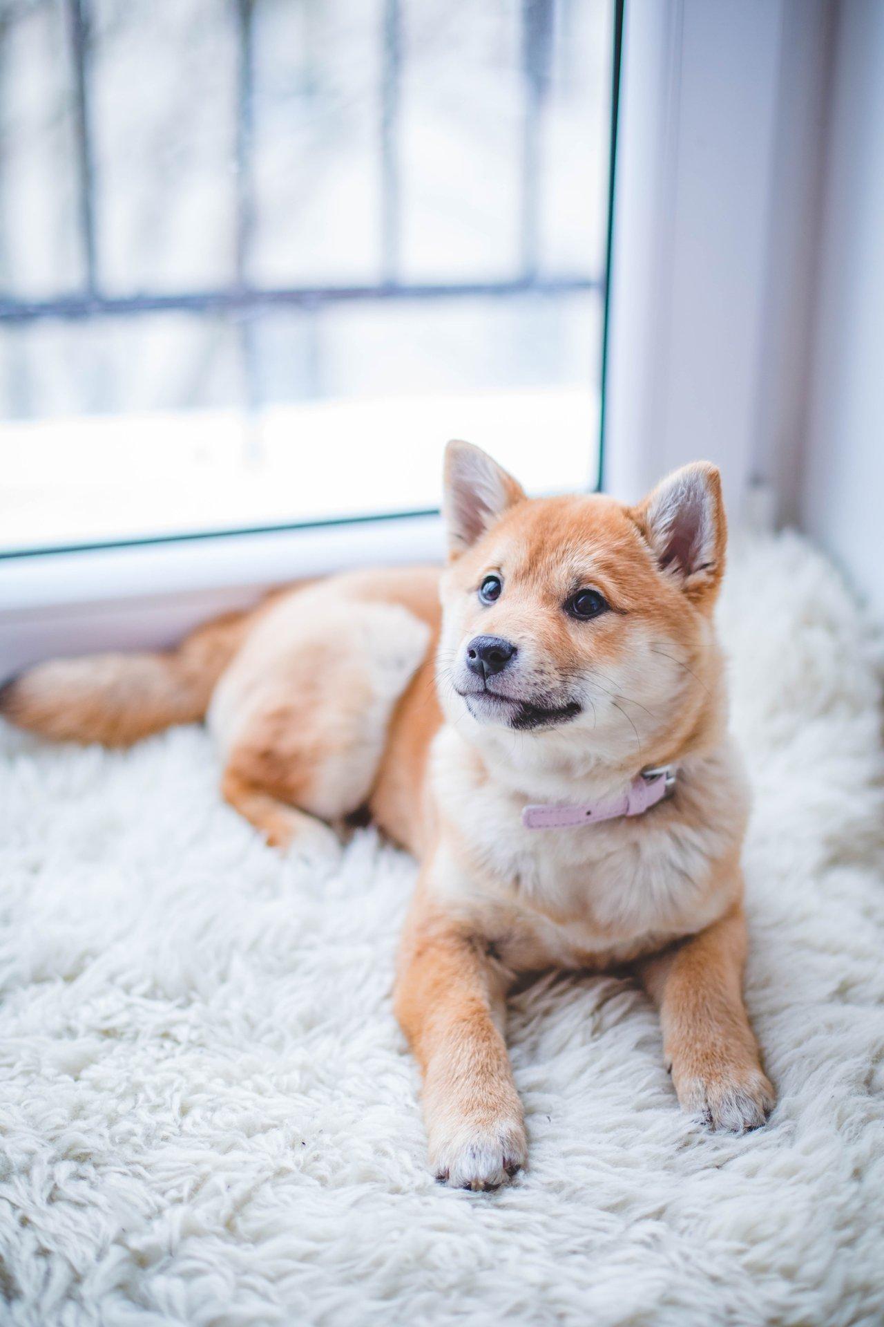 Besonders für Besitzer von behaarten Haustieren ist eine Investition in eine gute Fusselrolle sinnvoll.
