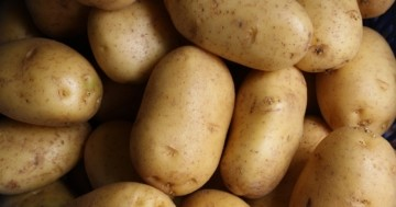 Kartoffelstampfer Test