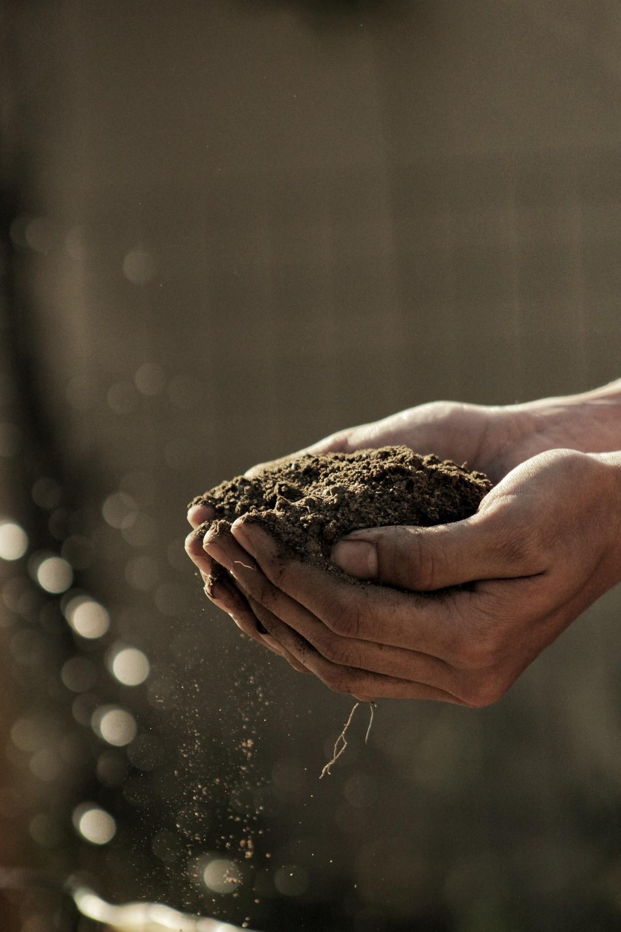 Biotonnenpulver hält Maden und andere Schädlinge von deinem Biomüll fern.