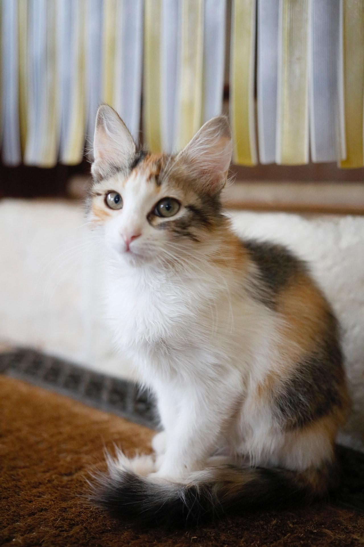 Besonders bei Haushalten mit Tieren, sollten Schmutzfangmatten regelmäßig gereinigt werden.