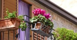 Balkon-Blumenkasten Test