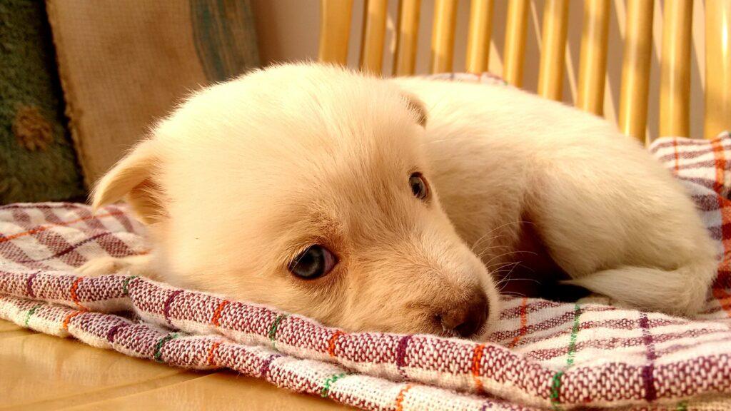 Je nachdem, wofür du deine Hundedecke benötigst, gibt es verschiedene Faktoren, auf die du achten solltest.