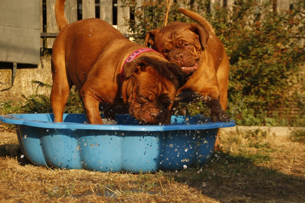 Hundepool Material und Groesse