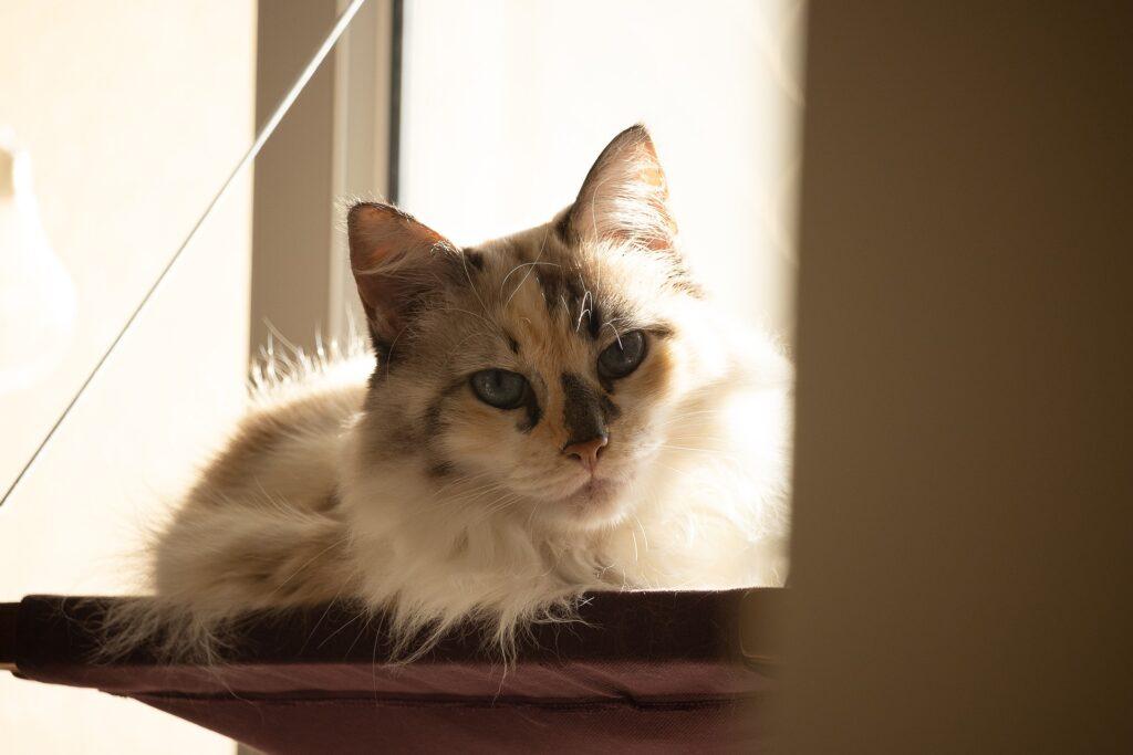 Katzenbetten gibt es in verschiedenen Groessen und Modelle.