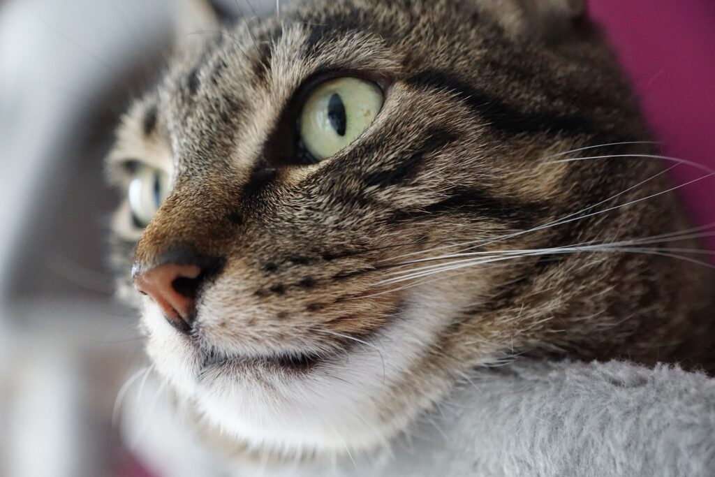 Katzenrucksack mobil unterwegs sein trotz Haustier