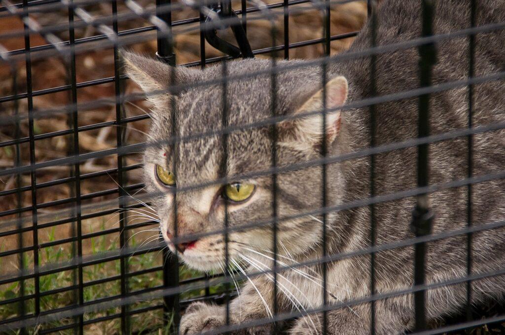 Im Handel ist eine Vielzahl unterschiedlicher Katzenfallen mit verschiedenen Funktionsweisen erhältlich.